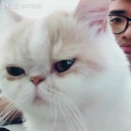 打Bbox给猫听ƪ(•̃͡ε•#撸猫##宠物#