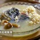 #美食# 川贝润肺止咳,加上营养丰富的花斑鱼,好喝又健康👍👍 #家常菜##吃货#