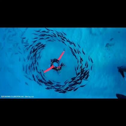 #旅行##帕劳##潜水#这个月在太平洋上潜水 ~