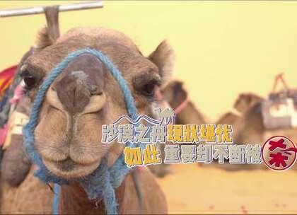 骆驼被宰杀成为沙漠地区最受欢迎美食,在中国数量比大熊猫还少!#撒哈拉沙漠##旅游##我要上热门#