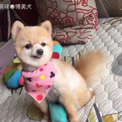 一只小萌球,激动的直哆嗦!#萌宠##俊介君##宠物#