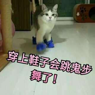 #宠物穿鞋大挑战#包哥穿上鞋子会跳鬼步舞了!😂#宠物##皮卡丘触电舞#