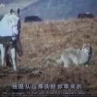 #宠物#这是一个真实发生的故事:四川野生动物女画家李微漪,收养了一只狼崽,取名格林。有一次,她在野外崴到了脚,接着童话般的一幕发生了:格林竟然为她牵来了一匹马👍@美拍小助手 喜欢请点赞+转发 更多精彩请关注微博:一起看MV