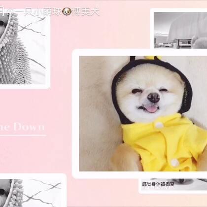 看完,记得点赞哦!#狗狗的萌照##宠物##小可爱,萌萌哒#