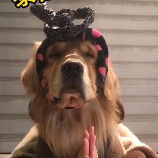 #泰国魔性舞#谁能告诉我封面是什么鬼😂#宠物##金毛控#@宠物频道官方账号 @美拍小助手