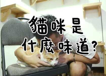 """【試聞!貓咪是什麼味道?】阿瑪:「為什麼要聞我們的味道,變態。」(閒聊在奴才微博""""志銘與狸貓"""")"""
