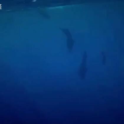 这是在斯里兰卡追鲸🐳的视频!