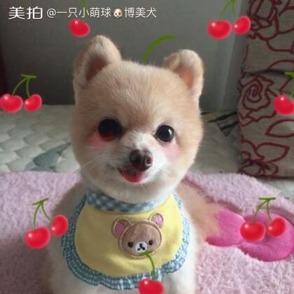 洗剪吹搞定!#乖乖洗澡的狗狗##宠物狗狗##博美#