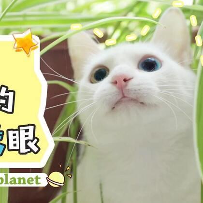timi:都说喜欢我的眼睛,那这次就让大家看个够吧😊 ✨关注并转赞评,下周五抽2位,送猫咪电暖袋哦✨ #宠物##我们养猫吧##timi#