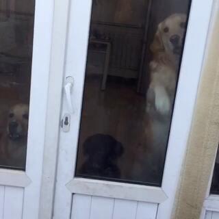 #宠物#武林决学😹#早安#