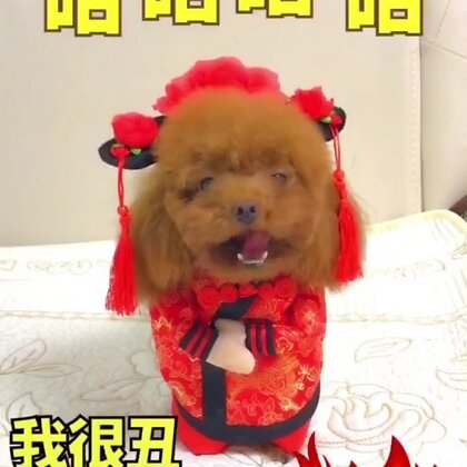 #宠物##搞笑##汪星人#我很丑,可是我很温柔😂