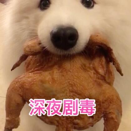 火龙果酸奶酪加烤鸡!绝配呀!哈哈!#宠物##吃秀##汪星人#