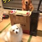 你们想念的豆豆来了,快来围观😄@宠物频道官方账号 @美拍小助手 #宠物##汪星人##搞笑宠物#