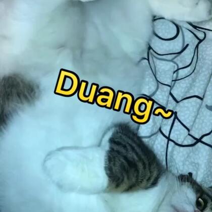 Duang~Duang~Duang~#宠物##奶家军#