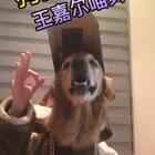 尼扣帅气上线,帅倒一条街😄😄@美拍小助手 @宠物频道官方账号 #王嘉尔喵舞##宠物##精选#