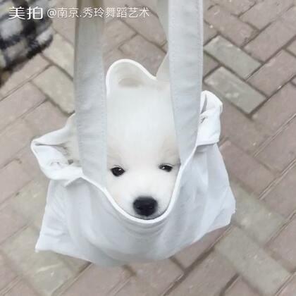 口袋狗😄#萌宠# diamond非常喜欢在袋子里享受…我的美拍最近都是被它给占据了😂