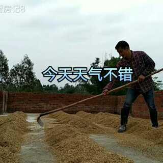 #美食##农村生活#晒稻谷