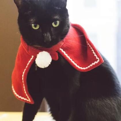timo:今天是感恩节?是大家都要来感谢朕的意思吗?[喵喵]#timo##萌宠##感恩节# 