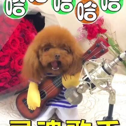 #宠物##搞笑##汪星人#哈哈😂