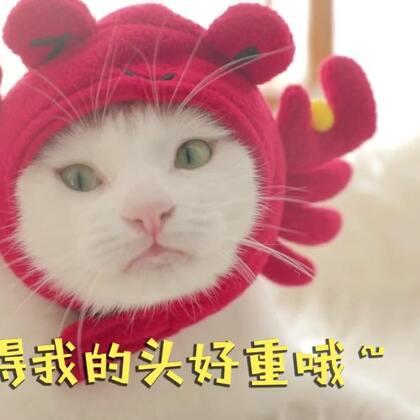 mimo:我是胖猪蟹~肉质肥美鲜嫩,我都想吃自己一口~#宠物##mimo#