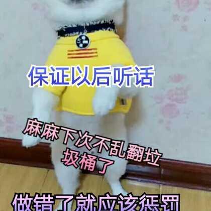 #宠物#屡教不改就要好好惩罚一下😂#精选##我的宠物萌萌哒#