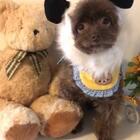 #宠物##精选#两个憨态可掬的小熊熊来啦😜😜可爱的小熊熊祝大家周末快乐🌹🌸🌷🌻