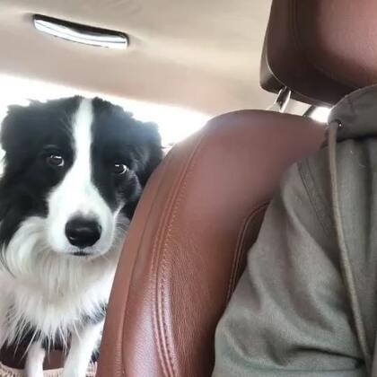 北京话十级!!人狗沟通无障碍🙈🙈🙈哈哈哈哈哈哈#宠物#