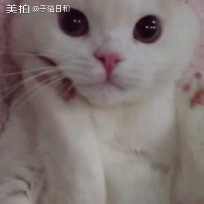 【子猫日和美拍】17-11-25 20:25