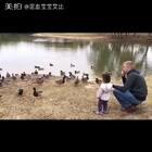 🦆鸭子越来越多,都是天冷繁殖么?😁 #宝宝##混血宝宝##混血儿#
