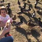 喂野鸭,这下有一点正脸了😛 #混血宝宝##萌宝宝##混血儿##宝宝#