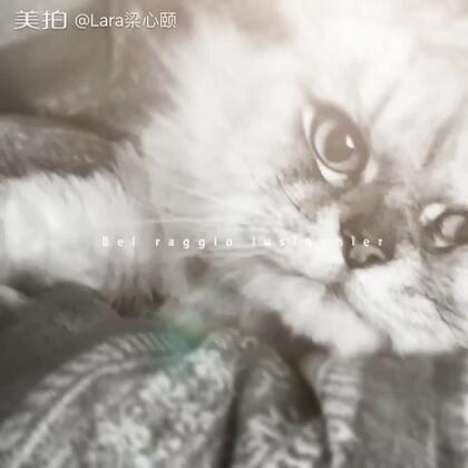 有「人」在#赖床⋯##猫##Lara梁心颐#