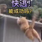 #宠物小剧场#特务猫被发现了!@美拍小助手