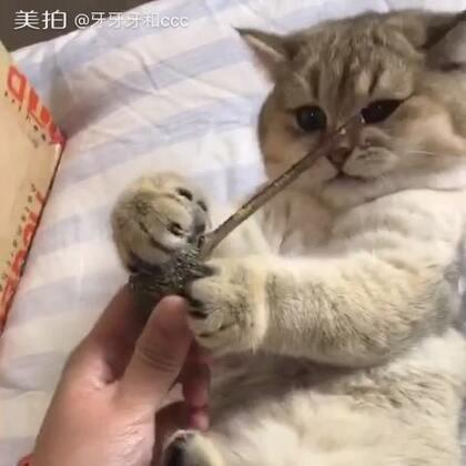 不要拿走我的爱!#宠物##猫咪#