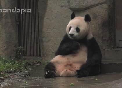 """#大话熊猫##也就才看二十遍# """"吧唧吧唧吧唧""""绩妈又吃什么好吃的了?一起来看看吧!"""
