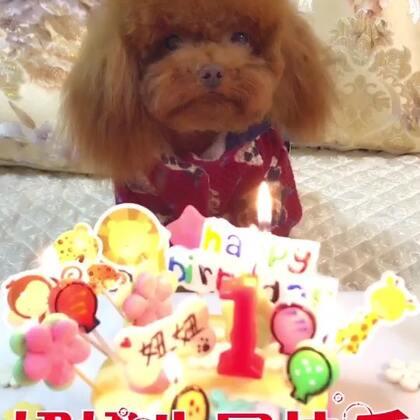#宠物##汪迷人#祝我们可爱的妞妞生日快乐🎂谢谢大家对妞妞的喜爱😘
