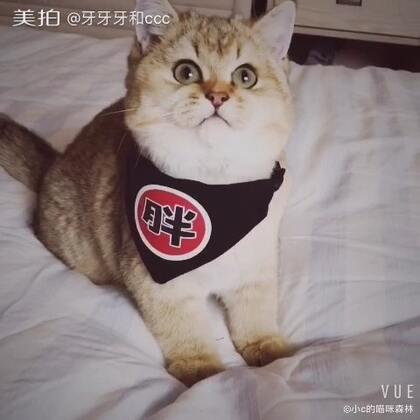 我们店新上的口水巾,超帅的#宠物##猫咪#