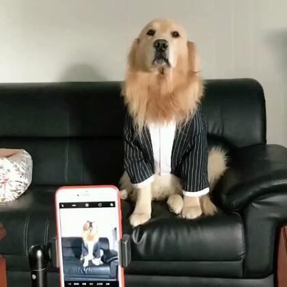 迪奥:你又套路我#宠物##搞笑#