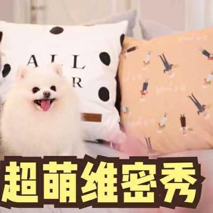 狗狗走秀大赛开始!为我点赞评论,留下微信号,随机掉红包!!#美拍维密秀##宠物#