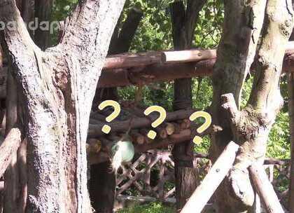 #也就才看二十遍# 小树君和球球的疑问:庆小呢?