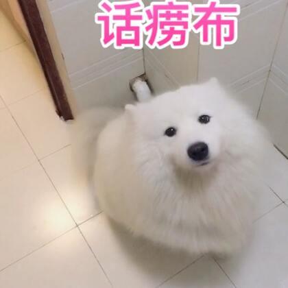 我也不懂为什么,布宝已经忘记自己是条狗了,没有一句是狗语,发自肺腑的和我吵架!来呀皇家翻译!#宠物##汪星人##精选#