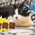 #重庆话萌宠配音#之【我的愿望】第二集。宝批龙召唤蜡烛精,只为重振当年雄风!