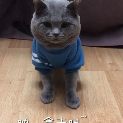 #人猫交流器#