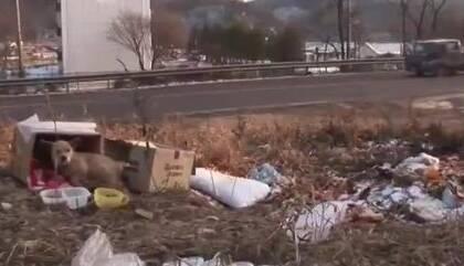 一只狗狗被遗弃在了垃圾场,时间过了很久都不肯离开,一直守着它身边的盒子.....