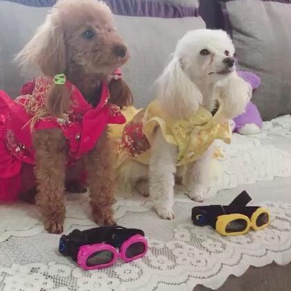 #汪星人#安妮美美准备出去玩!让美美选一下和衣服搭配的眼镜!美美给姐姐选和衣服颜色一样的黄色,自己选了一个和衣服接近的粉色😃😂喜欢安妮美美的仙女们快来抢沙发😙😙😙😘😘😘