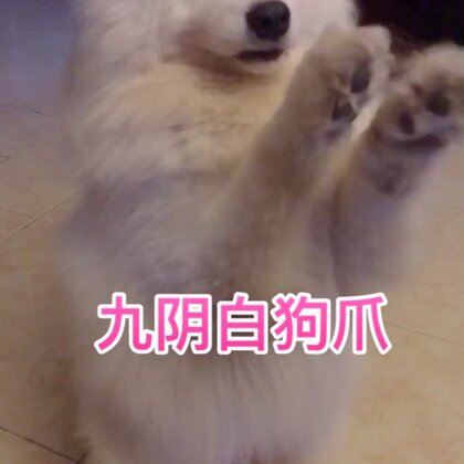 这辈子就没见布宝淡定过!#精选##宠物##汪星人#
