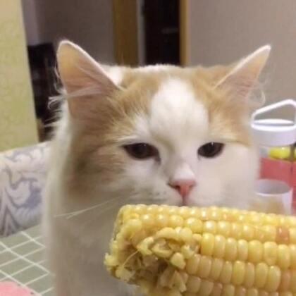 终于有样东西不跟我抢了😂。你不吃就不吃,最后还骂骂咧咧的给我个大🍉子是闹哪样?#宠物##猫咪#