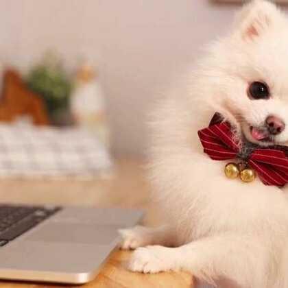 加班狗的一天是怎样的?#宠物#