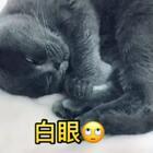 #宠物##晚安#晚安啦~我的宝贝们❤❤希望你们能健康成长