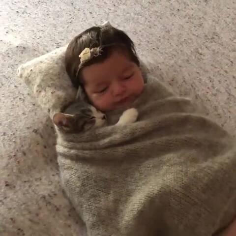 【发现网美拍】一喵一baby,晚安#宠物##宝宝#