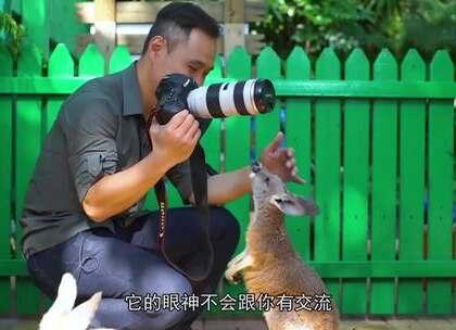 最懂动物的摄影师!一个转身就知道它们下一个动作,抓拍作品超有灵气#二更视频##宠物##我要上热门#